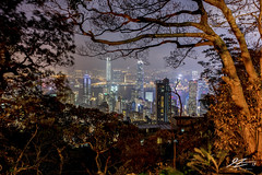Secret Viewpoint, Secret City (Tim van Zundert) Tags: hdr highdynamicrange hongkongisland kowloon hongkong china victoriapeak mountaustin thepeak trees skyscraper buildings city cityscape tower landscape night evening longexposure sony a7r voigtlander 21mm ultron