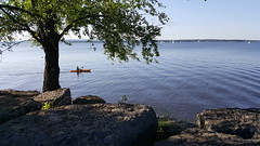 afternoon kayak (thomas.erskine) Tags: 20170705185441tee 2017 jul summer day ottawa river tree kayak paddling