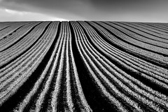 Lines Like Plasticine (Julian Barker) Tags: blidworth nottinghamshire east midlands england uk crop lines parallel plasticine monochrome blackandwhite farming agriculture arable land field hill contrast julian barker canon dslr 600
