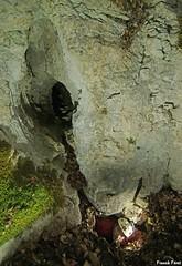 2ème Entrée des Deux Trous - Eternoz (inedit) (francky25) Tags: 2ème entrée des deux trous eternoz inedit franchecomté doubs grotte