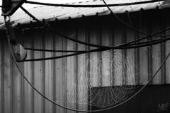 la toile Ilforddelta100pro LM+35 1004205 (mich53 - thank you for your comments and 4M view) Tags: abandonné abandonado abandoned toile leicamtype240 télémètre telémetro rangefinder bateaux boats summiluxm35mmf14asph graphicalexploration 4winter winter spinnennetz spiderweb toiledaraigné noirblanc blackwhite