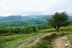 05 July 2017 Chinley Edale 9 Miles (56) (AJ Yakstrangler) Tags: yakstrangler chinley edale walk countryside tree