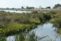 Okavango River (naturalturn) Tags: marsh wetland water river okavangoriver moremi moremigamereserve okavangodelta okavango delta botswana image:rating=5 image:id=204341