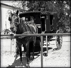 Patient Rosie (e r j k . a m e r j k a) Tags: ohio holmes walnutcreek trail amishcountry horse buggy roadside rural village oh39 us62 erjk