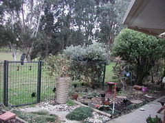 View from the office to the birdlife.. (spelio) Tags: backyard garden fence gate paddock july 2017 cracticines corvidae chough youtube video link