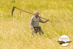 Farmer w/ scythe (Paradise in Portugal) Tags: portugal alentejo farmer scythe birdinginportugal birdwatchinginportugal