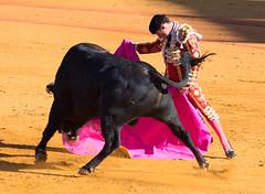 Antonio Ferrera  Sevilla. May 06, 2017  SEV_1328.jpg (Chris Connorton) Tags: bulls toreo bullfight veronica seville sevilla ferrera antonio spain colour matador toros corrida