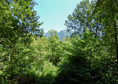 mt si (MissLydia) Tags: summer snoqualmiefalls wastate twinpeaks snoqualmie july nature 2017 theowlsarenotwhattheyseem staycation waterfall