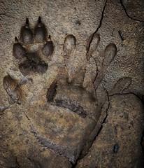 harmony (abhishekskumar) Tags: paw harmony love cute animal cat dog naturelover naturelovers natureindia planetearth green lovely loneliness shotoftheday