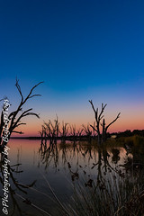 IMG_5459 (biglaptogs) Tags: barmera lakebonney riverland sa states sunsetsunrise
