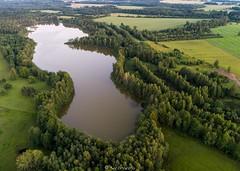Kuuni järv (BlizzardFoto) Tags: kuuni järv lake õhtu evening forest mets vesi water road tee viljandimaa droonifoto dronephotography aerofoto aerialphotography