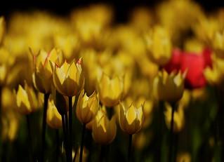 flower 1202
