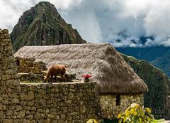 Machu Picchu -_DSC0512
