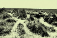 Sand Paths