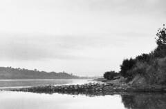 Vistula river bank // Brzeg Wisły (Other dreams) Tags: pomerania poland grudziądz vistula river bank film analog baryta photo landscape polish 50mm nikkor delta400 250asa rodinal 150 wildlife nature beaver