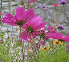 wild and free... (mar-itz) Tags: california sandiego balboapark water pond pink color nature