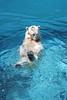水族館12 (ののリサを信じろ) Tags: 水族館 白熊 カエル 蛙 シロクマ なまはげ 獅子舞 神社 桜 鯉のぼり アシカ