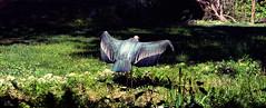 Pretty vulture (Heldin_im_Chaos) Tags: bird vulture zoo karlsruhe