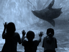 Fascination (coollessons2004) Tags: seal children water