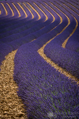 Lavanda curves (Olivier Rapin) Tags: 2017 france valensole lavandes courbes curves europa europe sony 70400mm a77