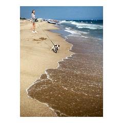 A dog lurking on the beach _ Perro acechando en la playa • • #playa #ocean #seaside #sand #walk #seascape #mar #walking #beachlife #coast #plage #sol #seaview #seashore #dogoftheday #oceano #doglover #praia #arena #petstagram #pets #puppylove #puppies #ri (IMARCHI) Tags: a dog lurking beach perro acechando en la playa • ocean seaside sand walk seascape mar walking beachlife coast plage sol seaview seashore dogoftheday oceano doglover praia arena petstagram pets puppylove puppies ripples imarchi mobilephotography imarchicom photographer fotografo madrid spain photography photo foto iphone phoneography iphoneography mobile eyeem instagram