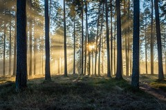 Brilliant light (PixPep) Tags: tallmon light brilliantlight landscape trees mist charlottenberg