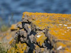 _61A3826.jpg (fotolasse) Tags: öland2017semesterottenbyfåglar öland ottenby fåglar birds sweden sverige hdr småland ö fågelstation canon fyr pir långe jan