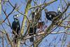 Cormorant / Aalscholver (rob.bremer) Tags: birds bird aalscholver cormorant phalacrocoraxcarbo nature natuur noordhollandsduinreservaat noordholland duinen dunes duinlandschap wildlife castricum infiltratiegebied