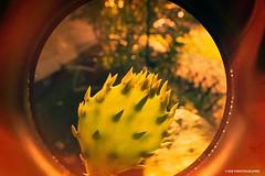Cactus fire - HSS! (JSB PHOTOGRAPHS) Tags: dsc364300001 copy cactus fire sliderssunday hss on1 on1raw nikon d50 1855mm