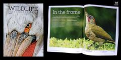 Wildlife Photography World Magazine - my pub (Nuno Xavier Moreira) Tags: whp wpw wildlife photography world magazine pub nuno xavier moreira wwwwildlifephotographyworldcom