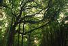 DSC_8321 copy (FMAG) Tags: kpn forest trees tree green kampinoskiparknarodowy poland polska granica dab deby 7dwf flora