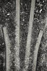 Old track (Nikon F4s, Kodak Tri-X 400) (alejandro lifschitz) Tags: lifschitz black white blanco negro outdoor kodak trix 400 lightroom photoshop silver efex pro epson 850 monochrome border shadows sombras uruguay colonia winter invierno solitude nikon f4s door puerta track via abstract abstracto steel train