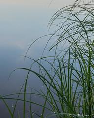 Aamu Kyrösjärvellä 12 (sirpamak) Tags: finland suomi lake järvi auringonnousu sunrise early morning landscape järvimaisema kyrösjärvi ikaalinen