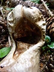 20170530Oberwinden4v8 Gesicht1v2 Natur Teufel Tabakbeutel (rerednaw_at) Tags: pölsoberkurzheim steiermark gesicht natur teufel tabakbeutel