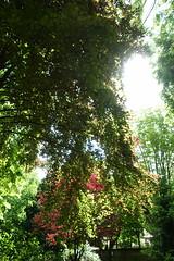 Parc Jean-Paul II @ Issy-les-Moulineaux