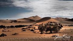 Namib Desert (jan-krux photography - thx for 2 Mio+ views) Tags: namib desert namibia africa afrika 4x4 offroad wueste sand dunes omd em1 travel reisen landscape landschaft duerr barren trees baeume buesche bushes einsam lonely solitary