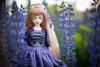 faery queen (koroa) Tags: bjd doll wild flowers forest leekeworld noella purple blue
