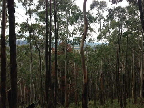 Bushland on Mount Macedon