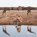 Etosha reflection