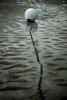 Maree basse - atana studio (Anthony SÉJOURNÉ) Tags: maree basse plage beach bouees flotteurs atana studio anthony séjourné buoyant