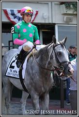 Disco Partner (Spruceton Spook) Tags: horseracing horses belmontpark discopartner jaipur
