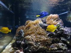 IMG_0249 (Alejandro Perez M.) Tags: medellin parqueexplora acuario