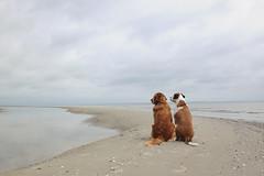 6/12 Edgar & Albert and the great wide open (Jutta Bauer) Tags: 12monthsfordogs 12monthsforedgarandalbert 612 dogs together sitting friendship beach sandbank summer clouds sea