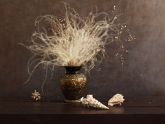 Briza, Feather Grass And Seashells (panga_ua) Tags: briza feathergrass seashells june summer delicate metallicvase light darkness fragile