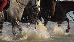 Playing (debra.hall88) Tags: frintononsea essex beach horses