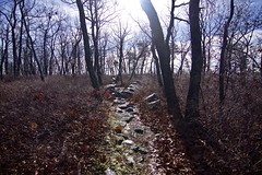 fullsizeoutput_8a (springday) Tags: freezeout freezeout2017 canon photography sprinday dayspring dayspringcreations camping trip good times hiking winterhiking goodtimes pa pennsylvania hellyeah fuckyeah cold icy