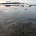 Living reefs of Pulau Jong