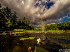 On the Lily Pond (gvonwahlde) Tags: lily lilypads lilypond fountain waterfountain sky clouds water trees landscape gopro vonwahlde