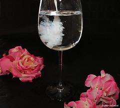 IMG_9790 (Photodapsyz) Tags: verre water eau fleur flower pink rose canoneos lait milk