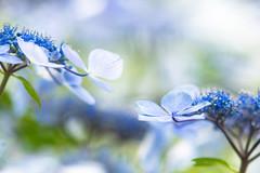 please catch my hand (hitohira_) Tags: flower flowers n atu re nature b bokeh